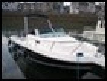 WHITE SHARK 236