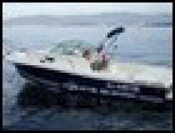WHITE SHARK 237